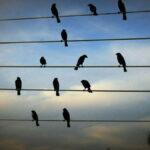 Pourquoi les oiseaux sur les lignes à haute tension ne sont pas électrocutés?